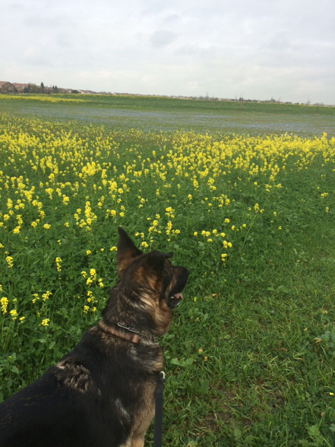 Enjoying N Natomas meadow